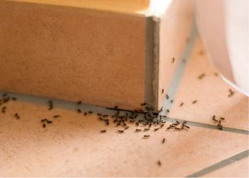 Уничтожение муравьёв. Дезстанция «Экомир»