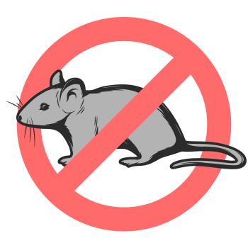 Уничтожением мышей занимается дезстанция «Экомир»
