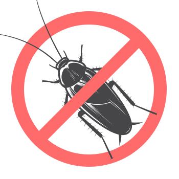Уничтожением жуков занимается дезстанция «Экомир»