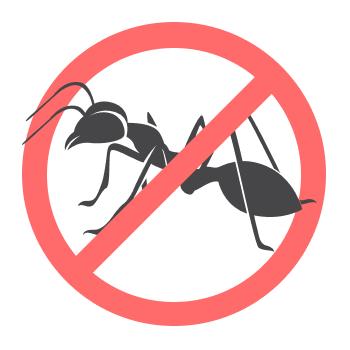 Уничтожением муравьёв занимается дезстанция «Экомир»